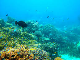 Global warming killing the Great Barrier Reef: Study