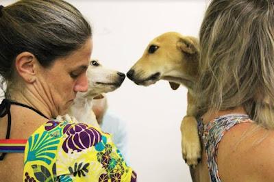 Páscoa PET inclusiva e sustentável na Vida Liberta, dias 4,5 e 6 de abril  no Downtown