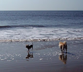 Are We Surfer Dogs???