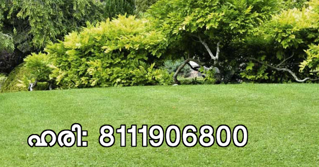 Landscaping Service Ettumanur, Kottayam