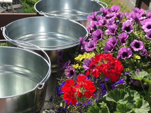Thinking ahead DIY Fourth of July Galvanized Bucket Planters