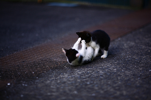 Cute&Cool Pets 4U: Cats and Kittens Playing Pictures and ...
