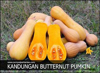 Kandungan nutrisi Labu madu atau Butternut pumkin (Cucurbita moschata)
