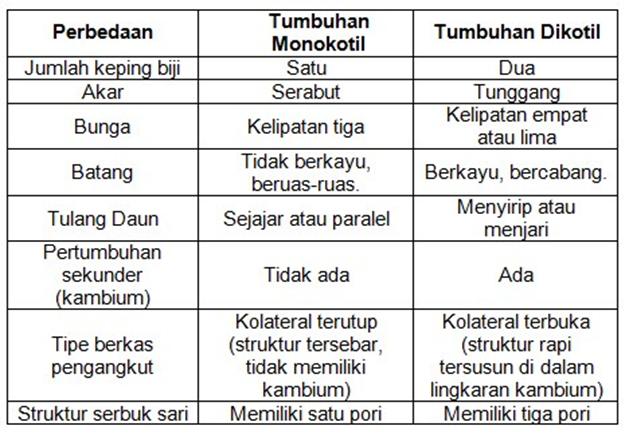 tabel menjelaskan tentang tumbuhan dikotil dan monokotil