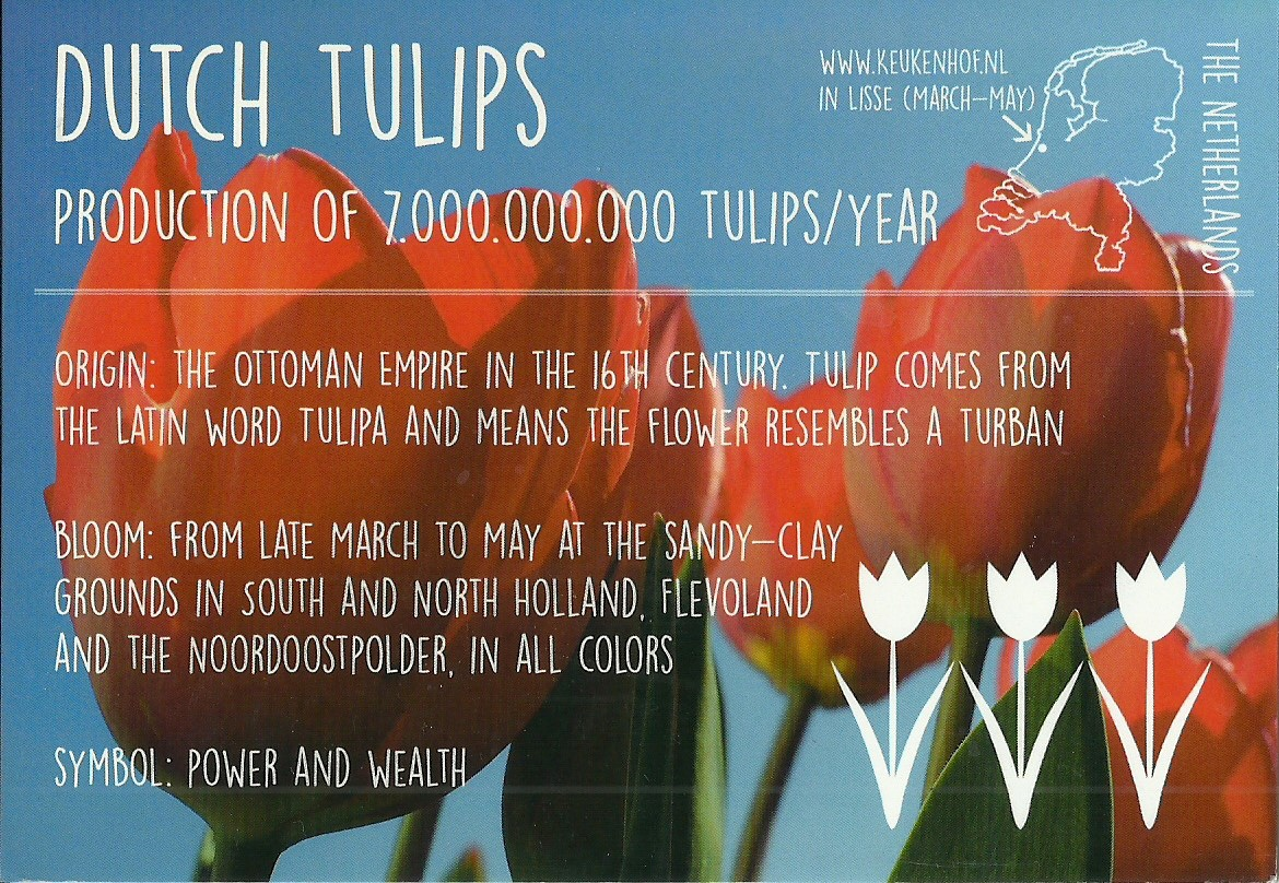 Ninu postcards unofficial greetings from dutch tulips unofficial greetings from dutch tulips kristyandbryce Gallery