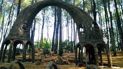 Hutan-pinus-pengger