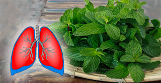 Amazing Plants Cleanse Your Lungs And Treat Bronchitis, Asthma And Cough