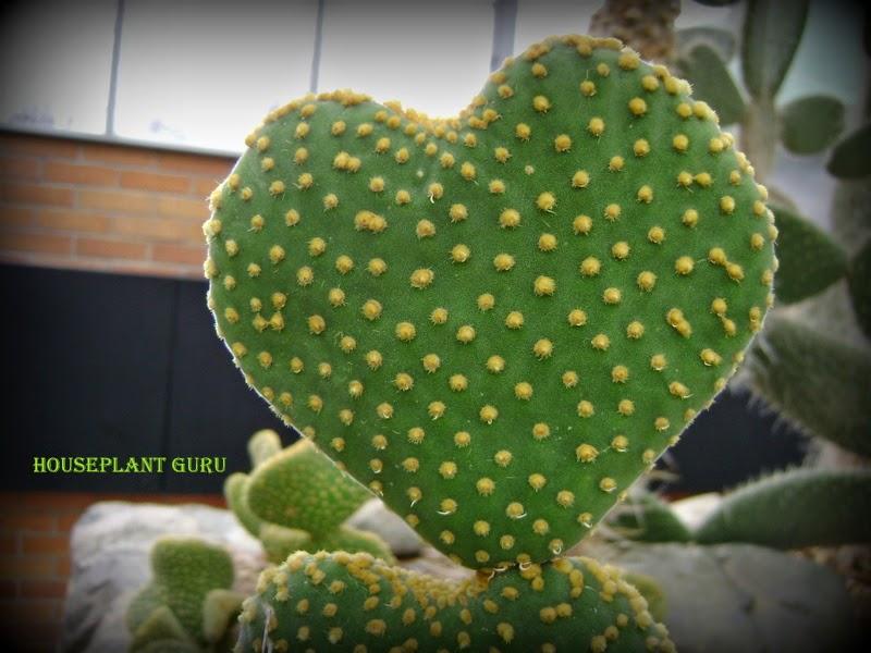 Cactus Latin Name