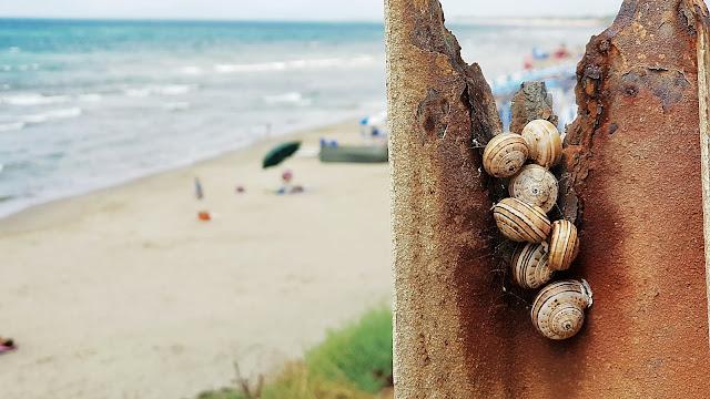 Gruppo di lumache aggrappate ad un Guardrail arruginito dalla salsedine