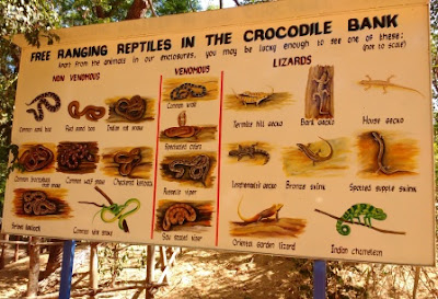 Reptiles in Crocodile Bank