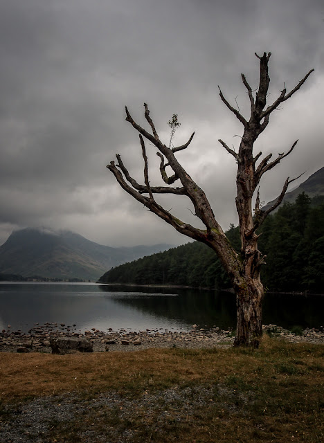 Photo of a dead lone tree on the shores of Lake Buttermere