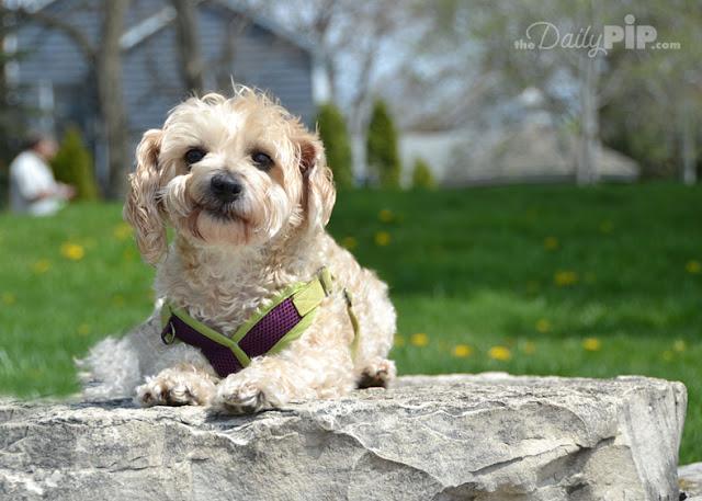 Help my dog (and I ) are socially awkward
