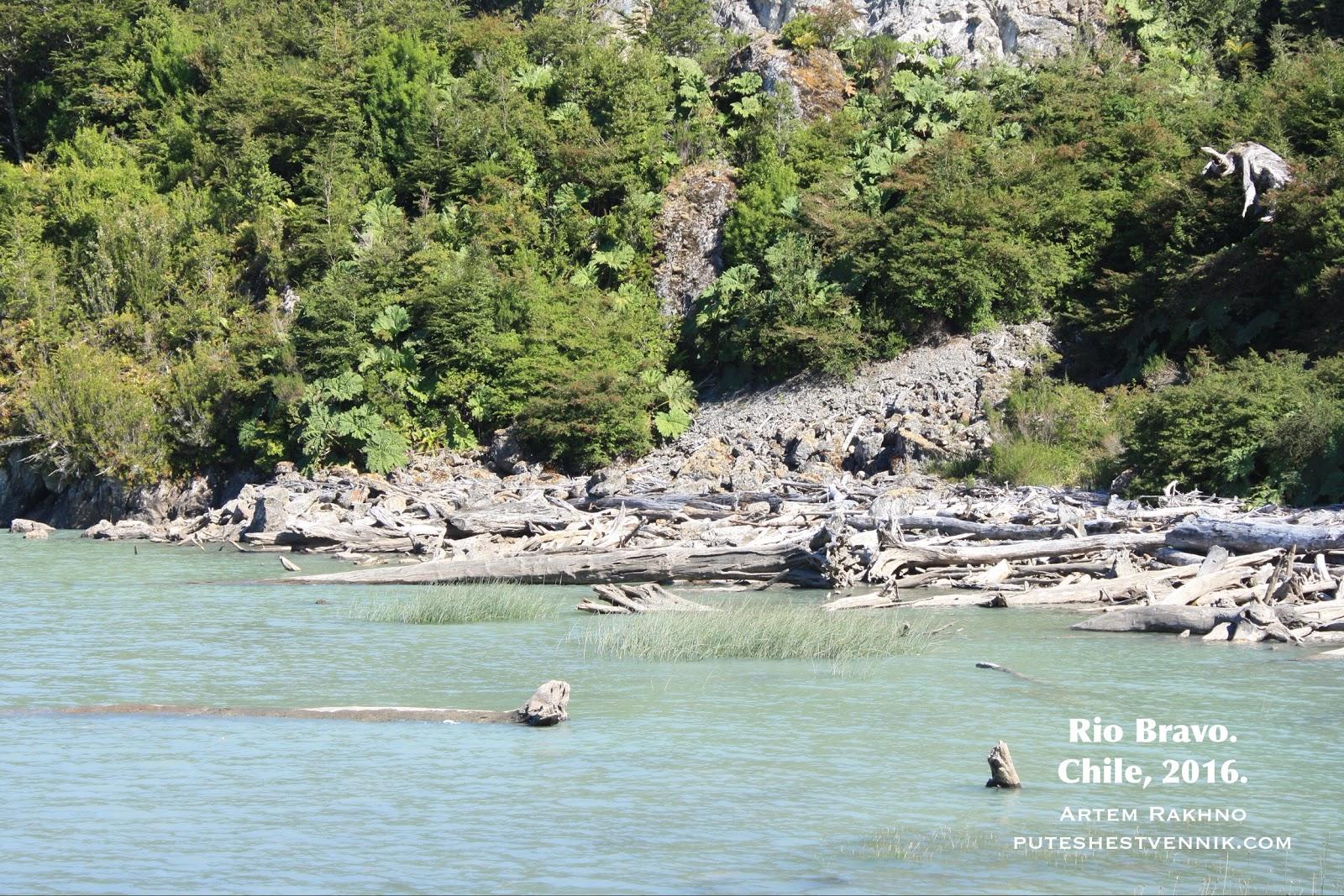 Выброшенные на берег деревья в Чили