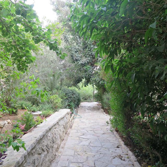 סמטה ירוקה בשכונת טלביה בירושלים