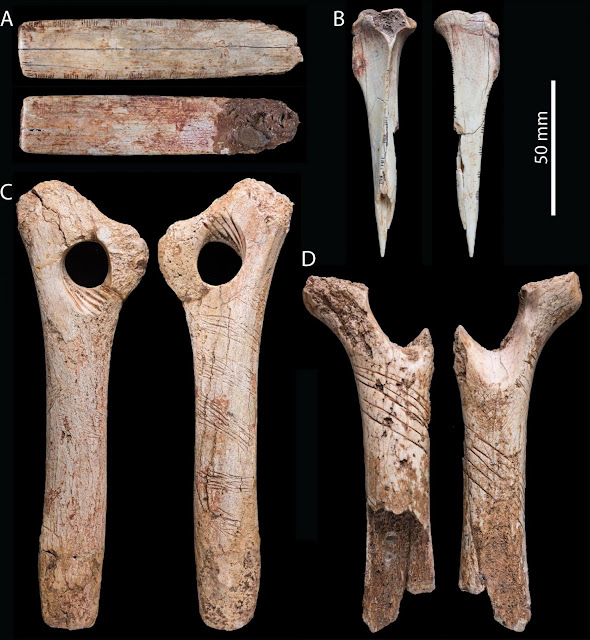 Human bones may have been engraved as part of a cannibalistic ritual
