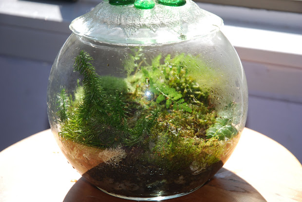 20 Fish Tank Terrarium Moss Pictures And Ideas On Meta Networks