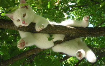 Wallpaper: Cat relaxes in a tree
