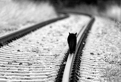 Γάτος σε γραμμές ηλεκτρικού...