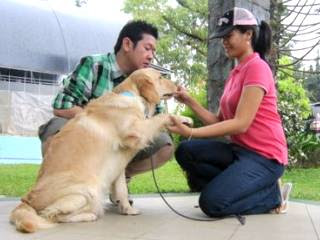Tips How to Make Dog be Obedient