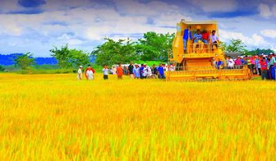 Hasil carian imej untuk sawah padi di setiu