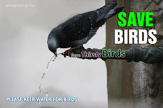 Thirsty birds drinking water Save Birds