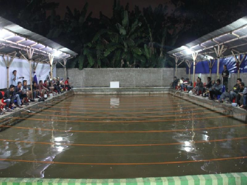 Gambar Umpan Jitu Galatama Lele Malam Hari Musim Hujan