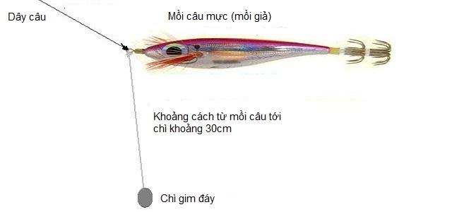 Hướng dẫn cách câu cá mực về đêm ở biển