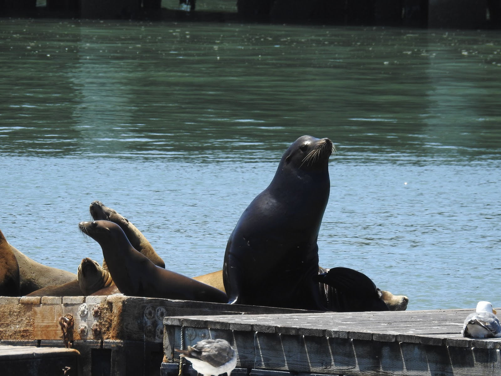 seals at the pier