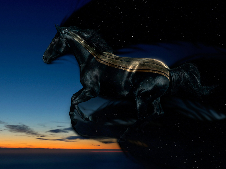 Horse Night Sky...