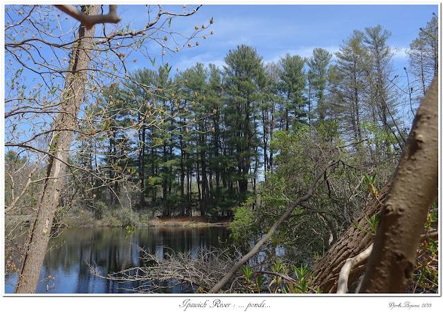 Ipswich River: ... ponds...