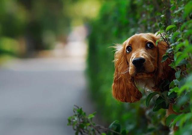 17 chú chó có hoàn cảnh bị nhốt trong nhà khi bố mẹ đi vắng như bạn