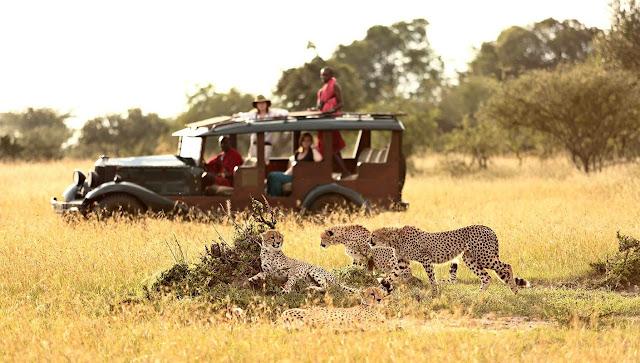 Book Your Ultimate Affordable Cl Ic Five Days Kenya Safari Masai Mara National Park Lake Nakuru National Park Safari Tour From As Low Us 520 Usd Per