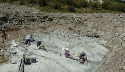 Fosil Kelelawar Raksasa Prasejarah Digali di Selandia Baru