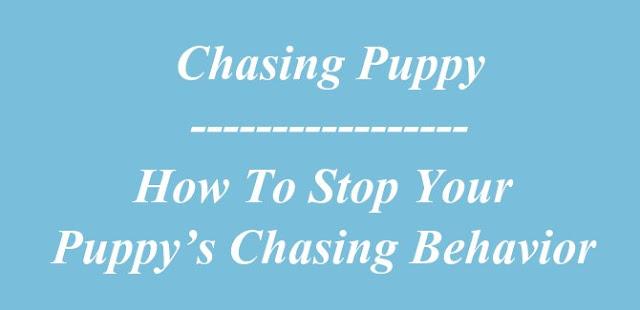 Chasing Puppy