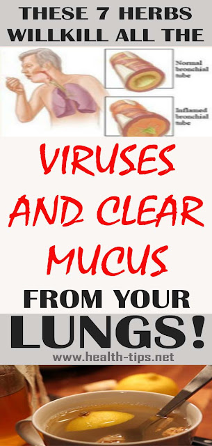 7 Herbs That Kill Viruses and Clear Mucus from Your Lungs#NATURALREMEDIIES