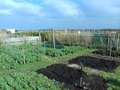 Allotment Growing - Autumn and Winter Crops
