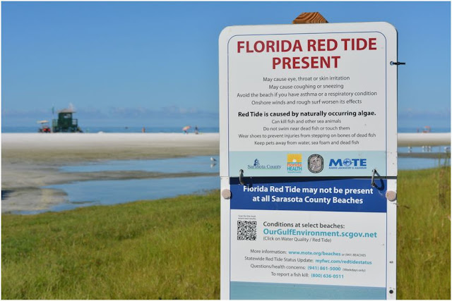 Lack of warning signs for red tide in Florida county beaches