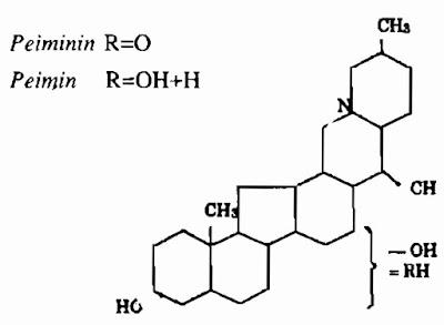 TPHH Triết Bối Mẫu - Fritillaria-BulbUs Fritillariae - Nguyên liệu làm thuốc Chữa Ho Hen