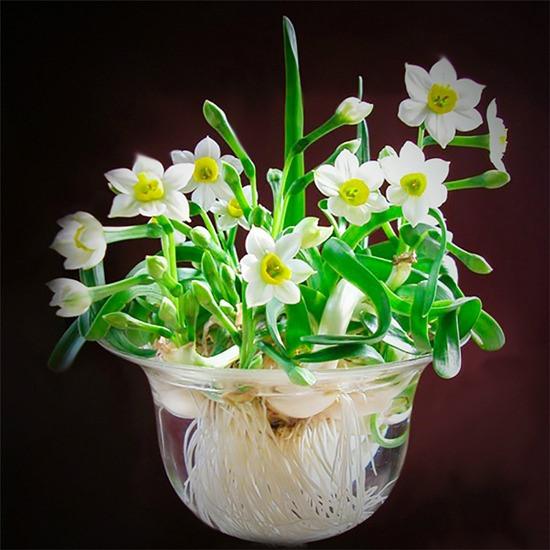 hoa thuy tien dep 3
