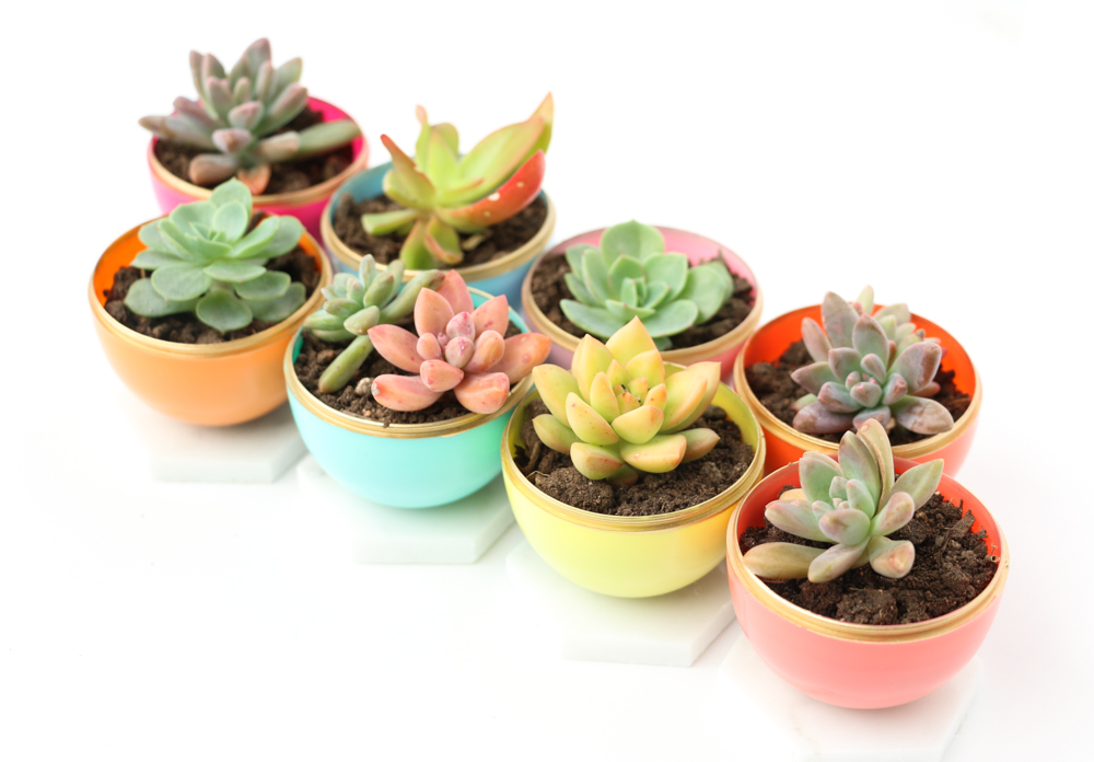 DIY Mini Spring Succulent Planters From Plastic Easter Eggs! What A Fun  Craft Idea That