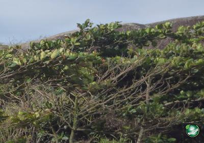 Vegetação - Instrumentos da Política Nacional do Meio Ambiente da Lei 6.938/81.