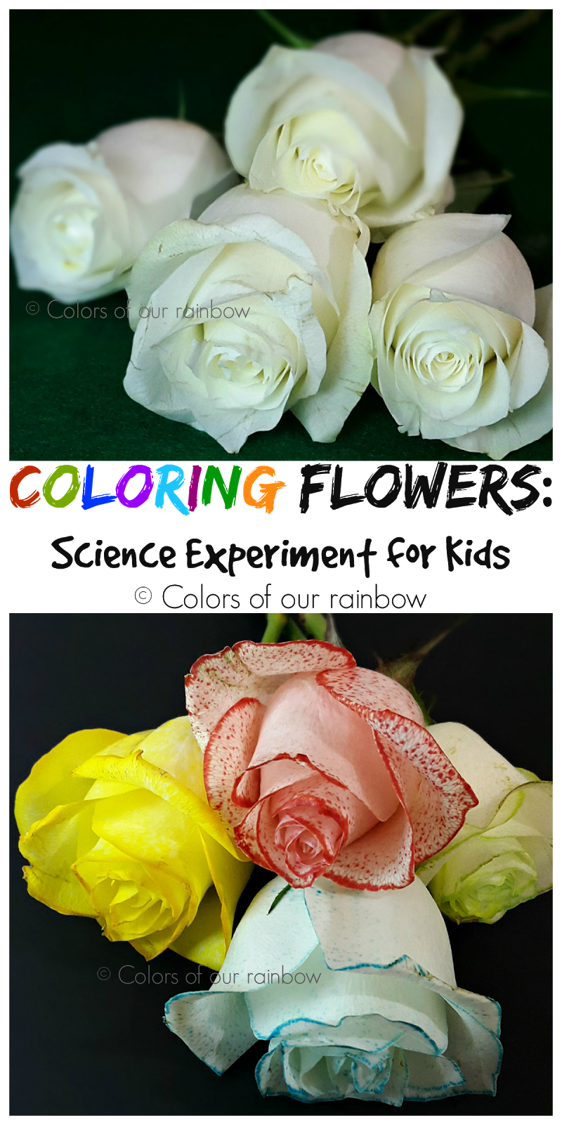 Coloring flowers experiment @colorsofourrainbow.blogspot.ae