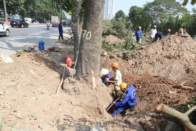 Chặt cây xanh tại Phạm Văn Đồng