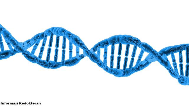 rekayasa genetika, pengeditan genom, DNA, RNA, biologi, praktikum laboratorium, jas lab, kedokteran, ilmu pengetahuan alam, watson crick, double helix, sekolah, kuliah, patologi, snmptn, sbmptn, universitas indonesia, unpad, gajah mada, ugm, undip, airlangga