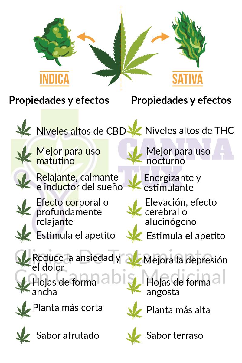 Cannabinoideando Sativa Vs Indica Parte I