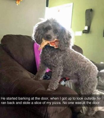 barking dog at door joke