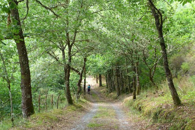Senda del Oro - Asturias