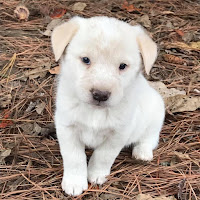 Free Dogs and Puppies in Birmingham,Alabama | Free Dogs and