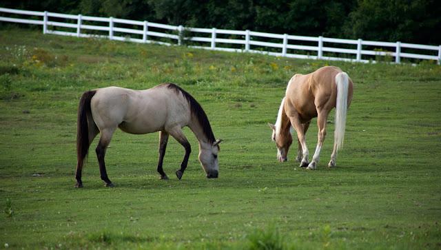horses, life, kids, parenting