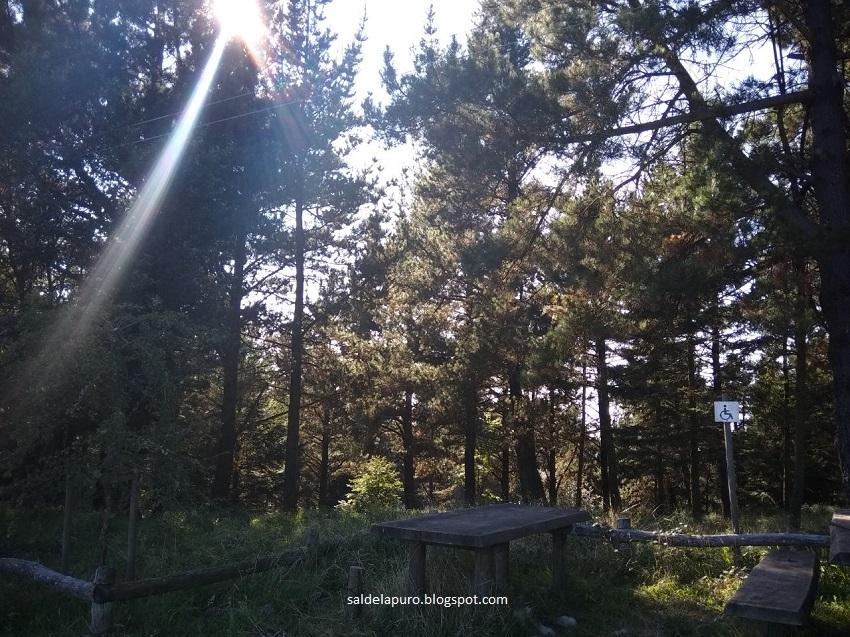 mesas-bosque